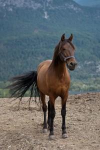 Tierhalterhaftpflicht für Pferde