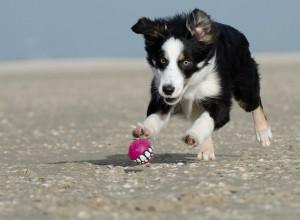 Tierhalterhaftpflicht für Hunde